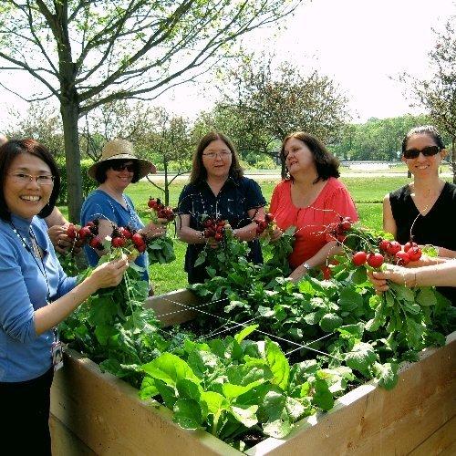 Harvard Pilgrim Healthcare garden