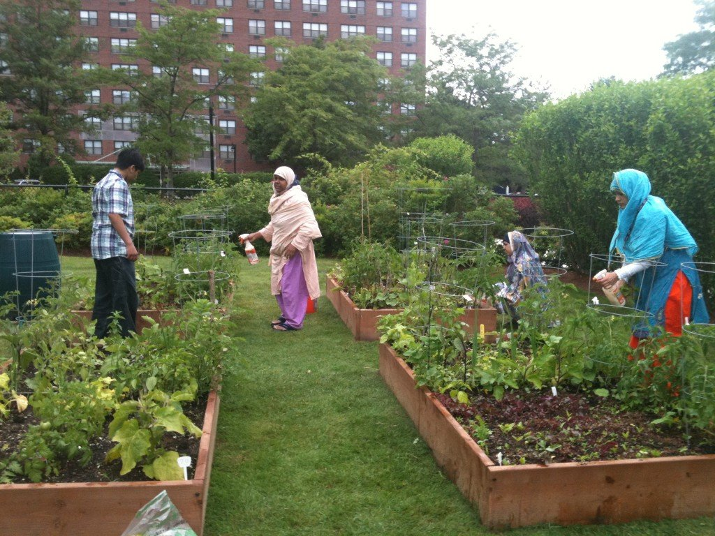 volunteers tend to the gardens at the Fresh Pond Apartments in Cambridge
