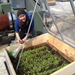 Adrienne and Cold Frame