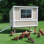 Chicken-Coop-Large