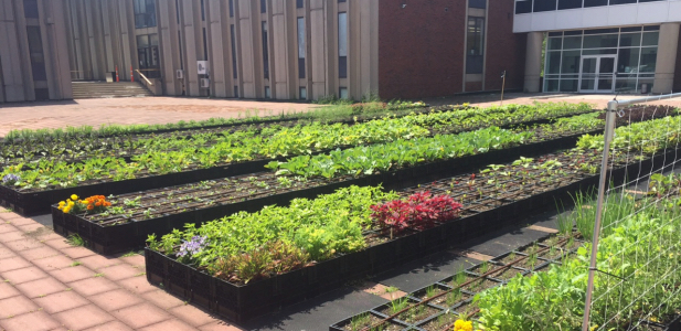 Brandeis University Rooftop Farm image