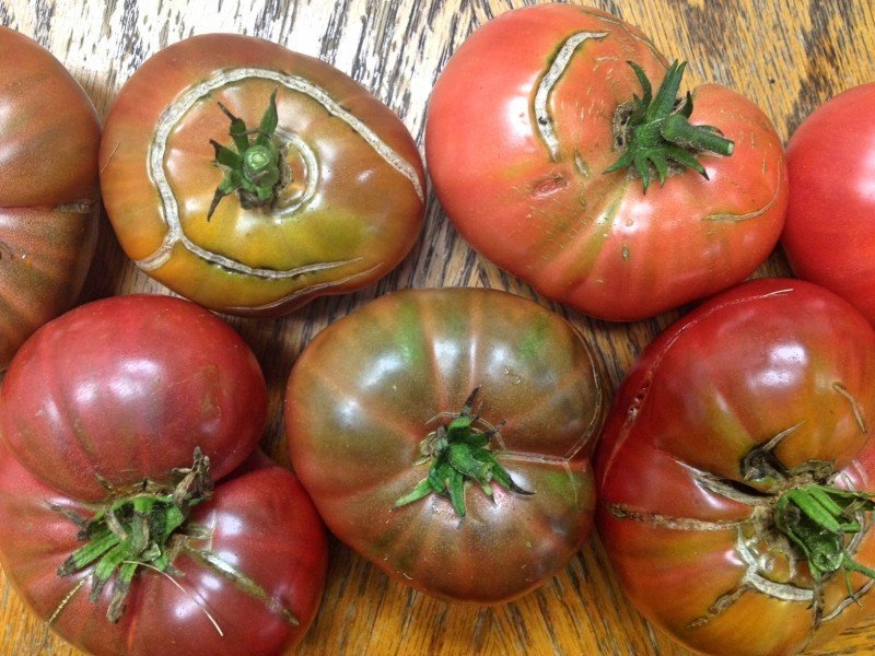 why heirloom tomatoes have scars, Beautiful flower