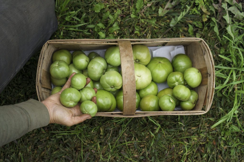 09green-tomato-basket-whats-in-season-with-des