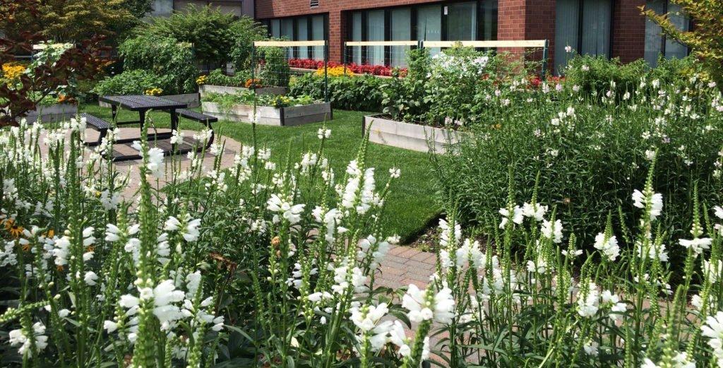 beauty garden flowers