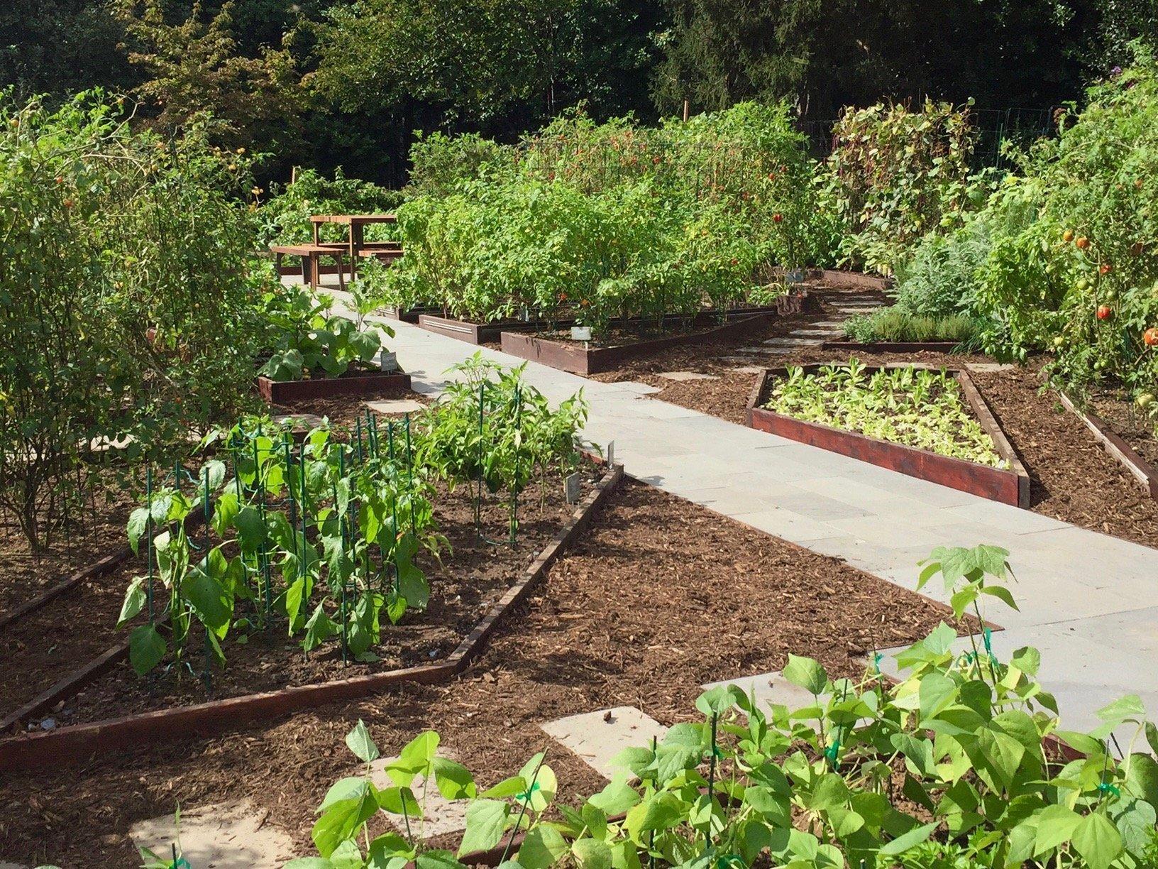 white-house-garden-2 - Green City Growers