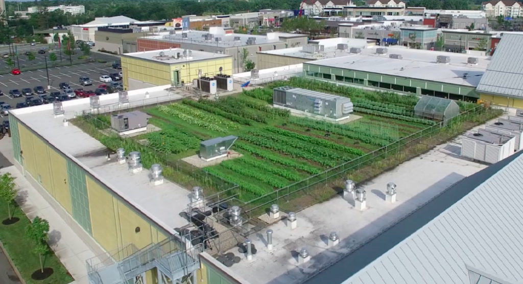 Green City Growers Urban Farming Rooftop Farms
